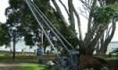 Russell's Crane